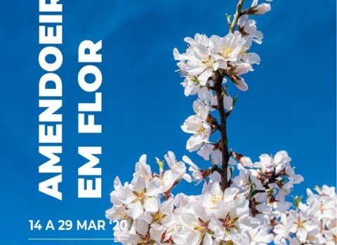 Amendoeirasemflor  medium  1 480 350