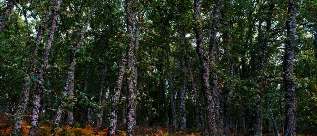 Bosque carvalhos 6  medium  1 1024 440