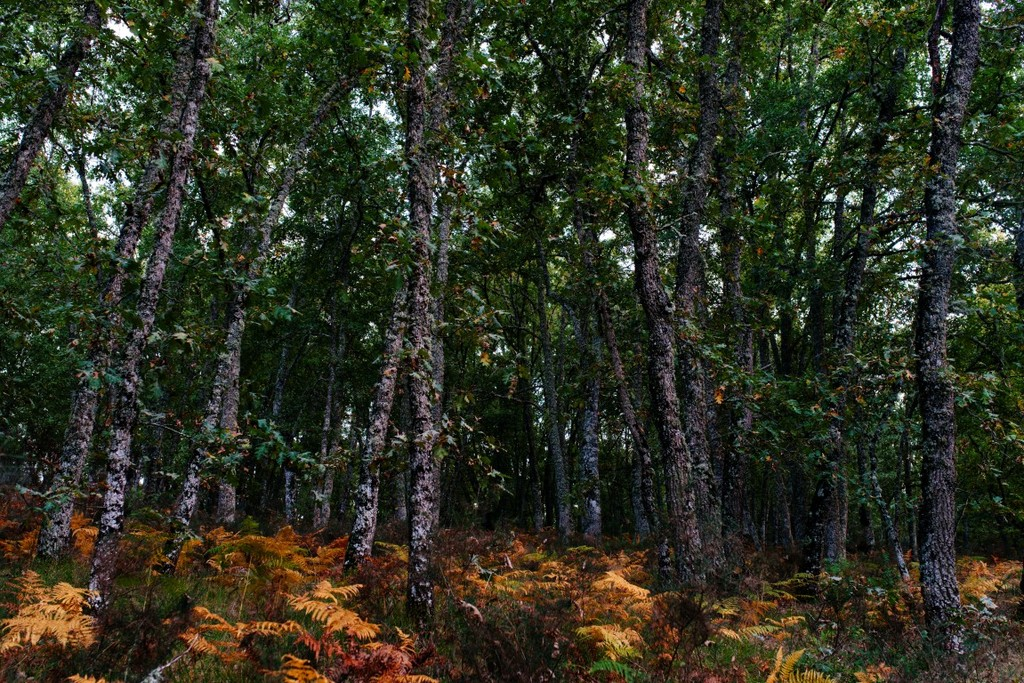 Bosque carvalhos 6  medium  1 1024 2500